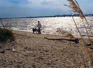 Man walking a dog along a beach